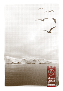 ternua2